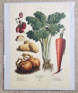 Vilmorin Andrieux Print 1881 No32 Strawberry Potato Onion Celery Carrot