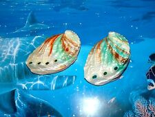 TWO (2) KAMCHA PEARL, GREEN AND RED ABALONE SEA SHELLS BEACH DECOR CRAFT
