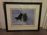 "Steven Townsend  ""Mac"" Border Collie signed print."