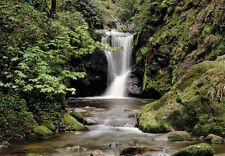 VLIES Fototapete-WALDBACH-(279V)- 350x260cm -Digital-7 Bahnen-Wald Wasserfall