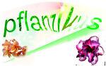pflanzikus