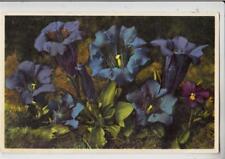 DA39.Vintage Postcard Flowers.Koch's Gentian. Thor Gyger