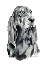 Black And Tan Coonhound Pencil Drawing 8 x 10 Art Print by Artist Dj Rogers