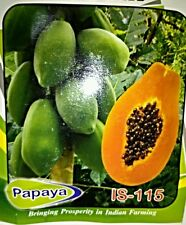 Papaya Papita 25 Seeds All Pincode Shipping