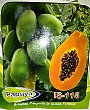 Papaya Papita 25 Seeds All Pincode Shipping