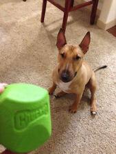 Juguetes de color principal verde para perros