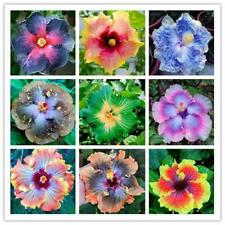 200pcs Giant Hibiscus Seeds 24kinds Hibiscus Rosa-sinensis Flower Seed Mix I1N4