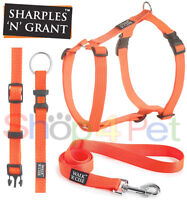 Walk 'r' Cise High Visibility Reflective Dog Harness, Collars, Leads NEON ORANGE