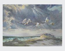Karl Ewald Olszewski Kunstdruck Poster Bild Lichtdruck Nach dem Gewitter 64x90cm
