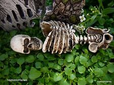 Miniature Fairy Garden Skeletal Remains Skeleton/ Bones 9 Pcs /  Faerie GO 16493