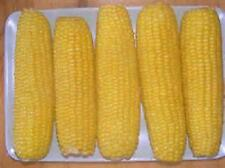 200 Seeds  Incredible sweet corn  new seed for 2017 season Non-Gmo Hybrid