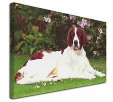 More details for irish red and white setter dog x-large 30