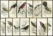 1853 Flycatchers Exotic Birds, Lot of 13 Hand-Colored Antique Ornithology Prints