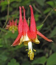 Columbine Wildflower Root