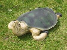 Taxidermie tortue  verte de mer  en résine  taille réelle.trophée factice