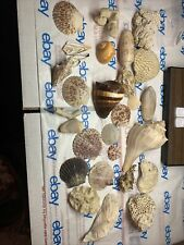 very nice sea shell Collection plus a few other sea items