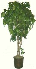 Artificial 7' Mango Tree Plant Bush Basket Arrangement Topiary Palm Patio Flower