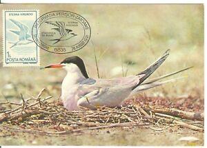 Romania Roumanie  1991   Birds  Sterna Hirunda  maxicard