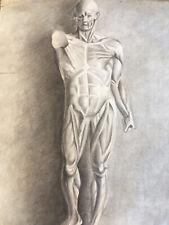 Superbe  grand dessin 60cm écorché anatomie curiosi à la main mine de plomb 1916