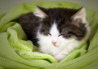 A4  Adorable Sleeping Cat Poster Size A4 Kitten Cute Mum Poster Gift #15677