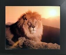 Lion King (Sunset) Big Cat Wild Animal Wall Decor Art Print Framed Picture