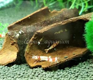 180g Organic Cinnamon Bark Healing Elements for Betta Discus Superb Shrimp Food