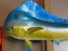 54 Inch Hawaiian Mahi Mahi Bull Dolphin Fish Mount Fiberglass Taxidermy