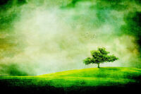 "perfect  36x24 oil painting handpainted on canvas ""Tree On Hill""@N4250"