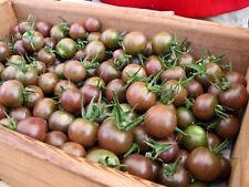 15 graines Tomates cerises