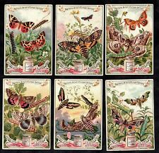 Moths Of Central Europe French Liebig Card Set 1898 Insect Vlinder Lepidoptera