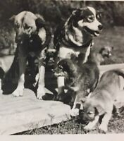 Postcard, Puppies, Dogs RPPC Photograph Jasper Alberta Canada Puppy Vintage P53