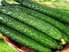1 Pack 100 Cucumber Seed Cucumbers Cuke Cucumis Sativus Organic Bulk Seeds S002