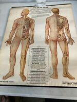 1973 Vintage Medical Poster ACUPUNCTURE Anatomical Chart Laminated DIANE NELSON
