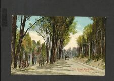 Valentine Vintage Colour Postcard Pine Forest Kloof Road Cape Town South Africa