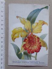A - carte ORCHIDEE Cattleya Dowiana Aurea - publicité pharmacie Darrasse