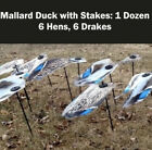 Fatal Flasher Mallard Field Pack with Stakes - 1 Dozen Duck Decoys