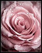 Chart Needlework Craft DIY DMC - Counted Cross Stitch Patterns - The dew Rose