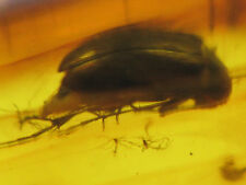 3mm BEETLE Genuine Gemstone Real Baltic Amber Fossil Insect Inclusion (0275)