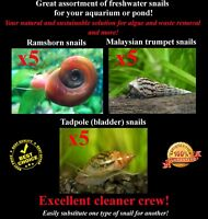 15+Live Cleaner/Feeder Snails 3 types Ramshorn, Malaysian, Pond (Fern Moss ADA)