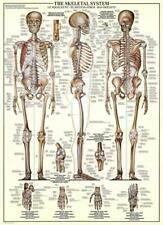 Eurographics The Skeletal System Jigsaw Puzzle  1000 Pieces EG60003970