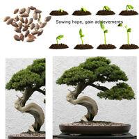 20 Fresh Seeds Beautiful Chinese Juniper Bonsai Tree Juniperus chinensis Tree