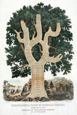 "20x30""Decoration CANVAS.Interior design art.United States History tree.U.S.6288"