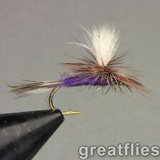 1 dozen (12) - Purple Haze - Parachute