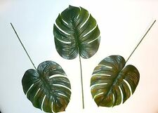 12 ullos Philodendron follajes grandes hojas philodendronblatt
