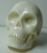 Memento Mori Schädel Totenkopf Skull Gotik Kopf Vanitas Kult Handarbeit