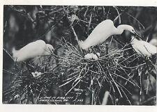 RPPC Scene in Bird City, AVERY ISLAND LA, Vintage Louisiana Real Photo Postcard