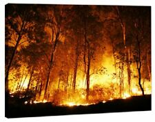 Canvas Art Picture - A Bushfire Burning Orange And Red At Night + A1 Single Pane