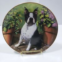 Petunia Pup Collectible Plate Boston Terrier By Dan Hatala Danbury Mint #B918