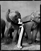Dovima Elephants & Women Fashion Model in Beautiful Black Dress Canvas Photo