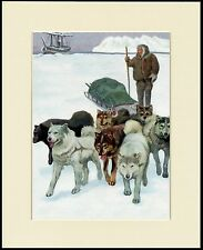 SIBERIAN HUSKY ESKIMO SLED DOG TEAM GREAT DOG PRINT MOUNTED READY TO FRAME